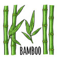 bamboo trees with leaf vintage engraving vector image