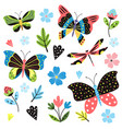 butterfly pattern bright summertime ornament vector image
