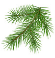 green fluffy spruce branch accessory symbol vector image vector image