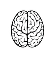 Brain top view vector image