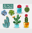 cactus succulent realistic transparent set vector image