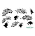 tropical black palm leaf branch silhouettes set vector image