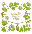 coriander elements set vector image vector image