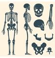 Human bones skeleton silhouette set vector image