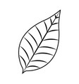 nature leave foliage botanical image vector image vector image