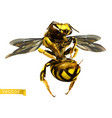 wasp 3d realistic vector image vector image