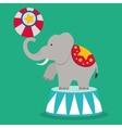 Circus icon design vector image vector image
