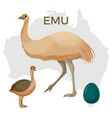 emu bird small and large isolated on white small vector image vector image