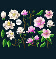 set of white and pink magnolia flowers vector image vector image