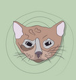 portrait of a cat on a background vector image vector image