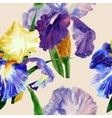 Seamless pattern with color irises1-02 vector image vector image
