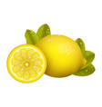 yellow lemon fruits s vector image vector image