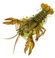 crayfish color realistic image a river crab vector image