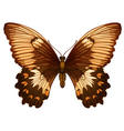 Papilio aegeus vector image vector image