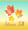 autumn leaves fall on sky background vector image vector image