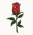 beautiful red rose with leaves vector image