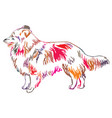 colorful decorative standing portrait of sheltie vector image vector image