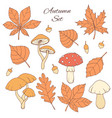 hand drawn autumn set with leaves acorns mushrooms vector image