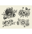 Flowers Hand drawn sketch flower poppy vector image vector image