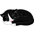 Kitten Sleep vector image vector image