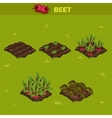 SET 10 Isometric Stage of growth Beet vector image vector image