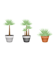 Three Palm Trees in Ceramic Flower Pot vector image vector image