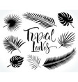 tropical palm leaves silhouettes vector image