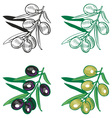 black and green olives drawing vector image vector image