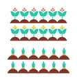 flower blooming plants carrot vector image
