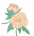 Peony isolated on white background vector image vector image