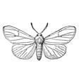 fallweb worm moth vintage vector image vector image