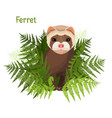 ferret in green leaves of fern polecat cute vector image vector image