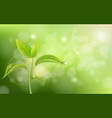 growing sprout on green background vector image vector image