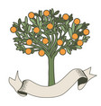 orange tree with blank label on white background vector image vector image