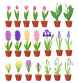Spring flowers in flower pots irises lilies of vector image