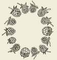 berries hand drawn vector image