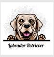 color dog head labrador retriever breed on white vector image vector image