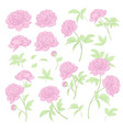 peonies bud collection elements peony isolated vector image
