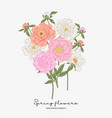 pink and white peonies bouquet spring flowers vector image vector image