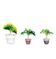 Three Evergreen Plant in Terracotta Flower Pot vector image vector image