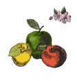 apple sketchvintage ink hand drawn of vector image