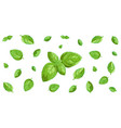 basil leaves horizontal background vector image vector image