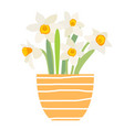 bouquet spring flowers daffodils in flower pot vector image