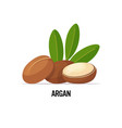 fresh argan seeds icon tasty ripe nuts isolated vector image