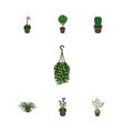 isometric flower set of plant peyote blossom and vector image