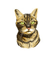 striped cat head with neck vector image vector image