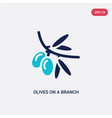 two color olives on a branch icon from ecology vector image vector image