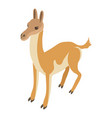 young deer icon isometric style vector image vector image