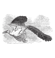 Archaeopteryx bird vintage vector image