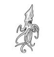 squid animal sketch engraving vector image vector image
